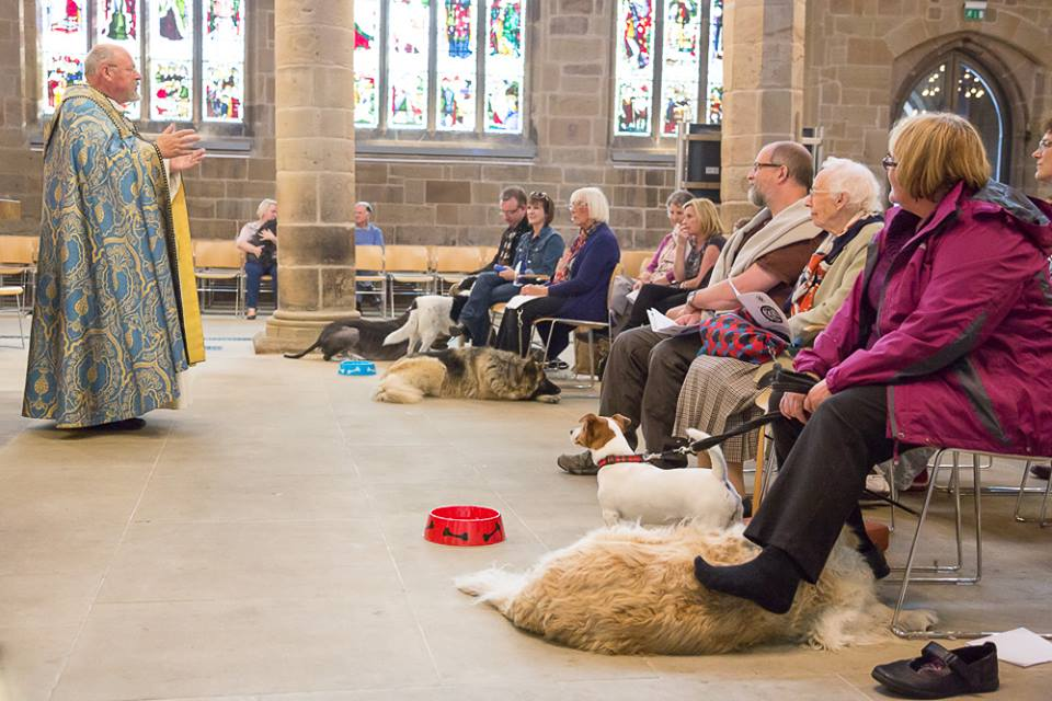 A number of dogs at the front of the congregation listening to Canon Tony
