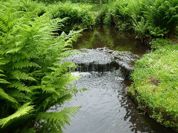 River with ferns on the bank