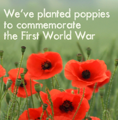Planting Poppies to commemorate WW1 - Twitter banner